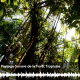 Paysages sonores de la forêt tropicale